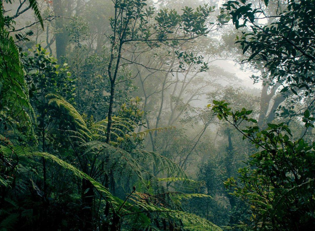 Las na Kalimantan
