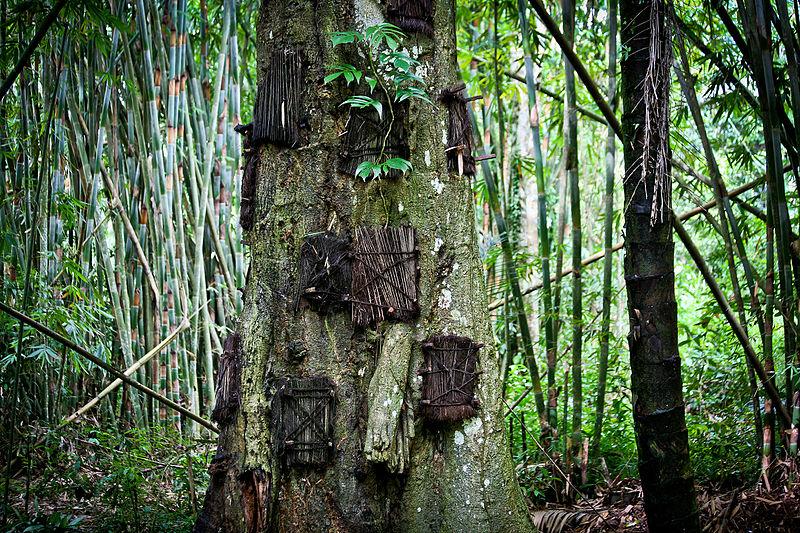 Las w Tana Toraja