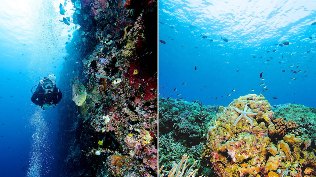 nurkowanie papua